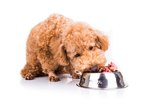 Experts Expose Hidden Dangers Of Raw Meat Pet Food Trend