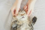 Should You Massage Your Cat?
