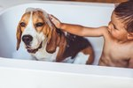 What Can I Use Instead of Dog Shampoo?
