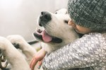 Do Dogs Feel Love and Hate?