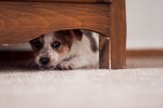 How To Prepare Your Pet & Yourself For An Earthquake