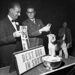 Explanation of Reserve Ribbons in a Dog Show