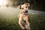Kim Brophey's Guide To Understanding Dog Behavior Is The Wake-Up Call Pet Parents Need