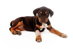 Care Tips For Pet Casts & Splints