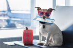 How to Travel Overseas With Your Dog