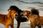 How to Safely Break Up a Dog Fight