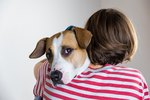 Can Dogs Have Panic Attacks?