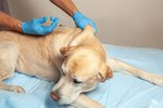 Side Effects of the Canine DA2PP Vaccine