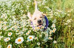 How to Plant a Pet-Safe Garden