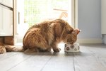 What Should You Feed Older Cats? Here Are the Best Senior Cat Food Options