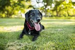 6 Tips That May Help Prevent Arthritis in Dogs