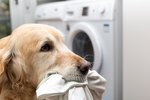 Underwear, Birth Control & Rectal Cream: What Your Dog Is Eating Might Shock You