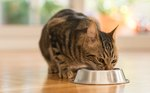 What to Feed a Cat With Diarrhea