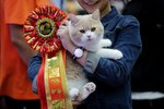 Cats Ready To Crash This Year's Westminster Dog Show