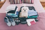 Which Hotel and Motel Chains Are Pet-Friendly?