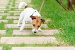How Much Should I Let My My Dog Sniff on Walks?