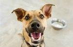 What Happens if a Dog Eats Silica Gel?