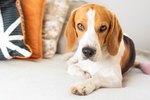 113 Fun Nicknames For Your Dog