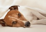 Treatment for Bloody Diarrhea in Dogs