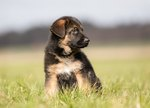 What Is the Easiest Dog to Potty Train?