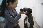 How to Tell if a Dog is Pregnant Without a Vet