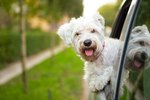 What's The Safest Way To Transport Your Dog In The Car?