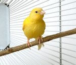 How to Train a Canary to Sing