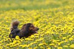 108 Flower Names For Dogs