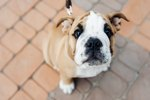 What Leash Length is Best For Your Dog?
