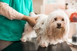 Chagas Disease In Dogs