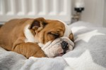 Why Does My Dog Cry While Sleeping?