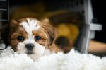 Should You Cover a Dog Crate?