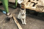 Shelters Have A New Way To Save Feral Cats From Death