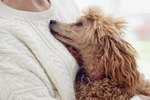 Can Dogs Smell Our Emotions?