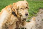 How to Treat a Pregnant Dog for Fleas