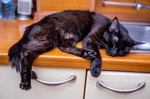 Is a Cat Sleeping in Unusual Places a Sign of Sickness?