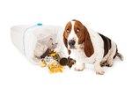 Do Dogs Feel Guilty?