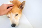 How to Recognize and Treat a Dog's Skull Fracture