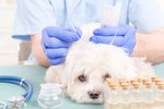Yes, Pet Acupuncture Is A Thing & Here's What You Need To Know About It