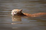 Badass Cat Swimming Through Harvey Floodwaters Is Now A Symbol Of Texan Resilience