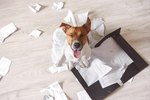 Middle-Aged Male Pets Are More Likely To Destroy Your Stuff Because Boys
