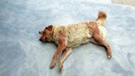How to Diagnose Skin Problems in Dogs