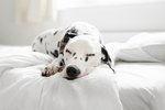 What To Expect After Deworming A Dog