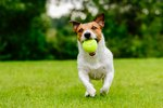 The Best Games to Play With Your Dog