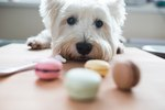 How Bad is One Piece of Chocolate For Dogs?