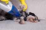How to Remove Pet Hair From Clothes