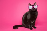 103 Cool Cat Names