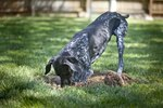 What Can I Spray on My Yard to Keep Dogs From Digging?