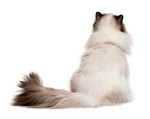 Cat Tail Conditions and Diseases