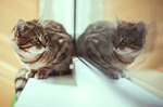 25 Cats Reacting Hilariously To Mirrors